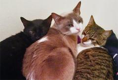 gatinhos.